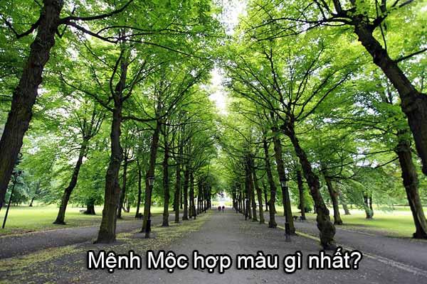 menh-moc-hop-mau-gi